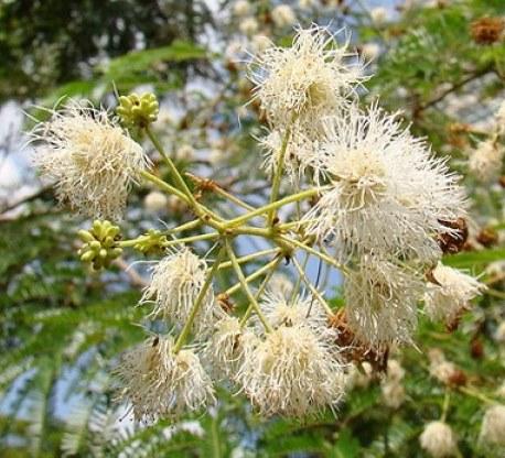 Flores - Maricá