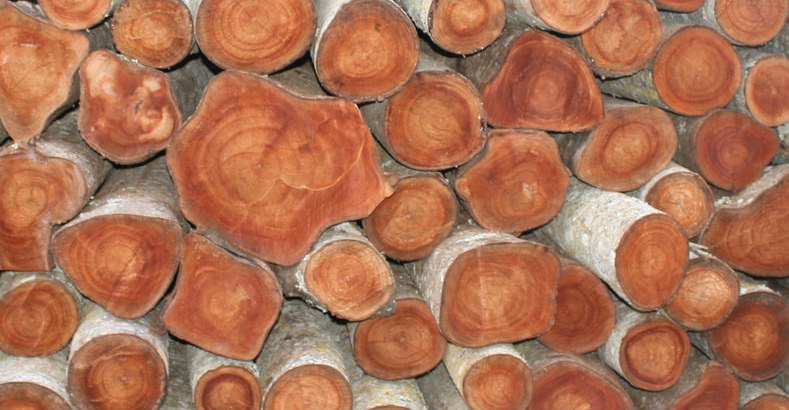 Madeiras de Mogno Africano