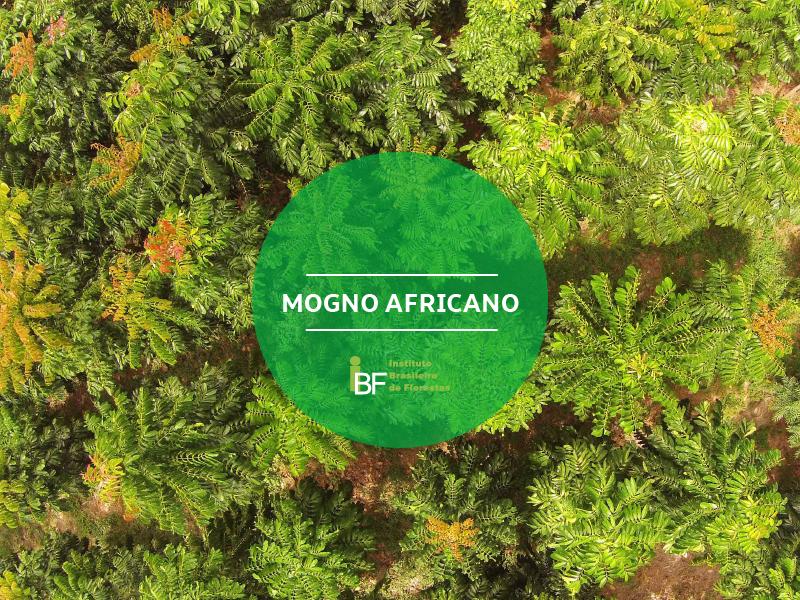 Álbum fotográfico de cases de projetos florestais