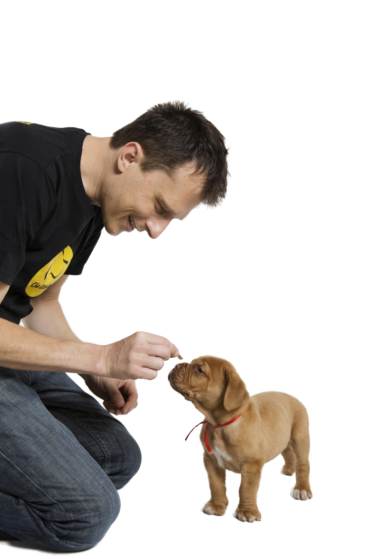 adestramento de cachorro