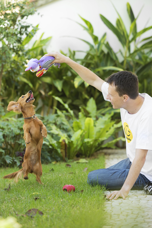 adestrar cachorro