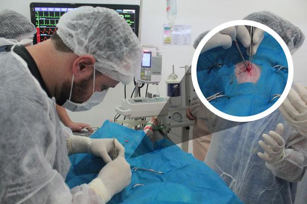 castração com técnica do gancho
