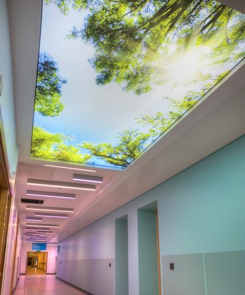 Tela tensionada simulando um ambiente aberto e arbóreo
