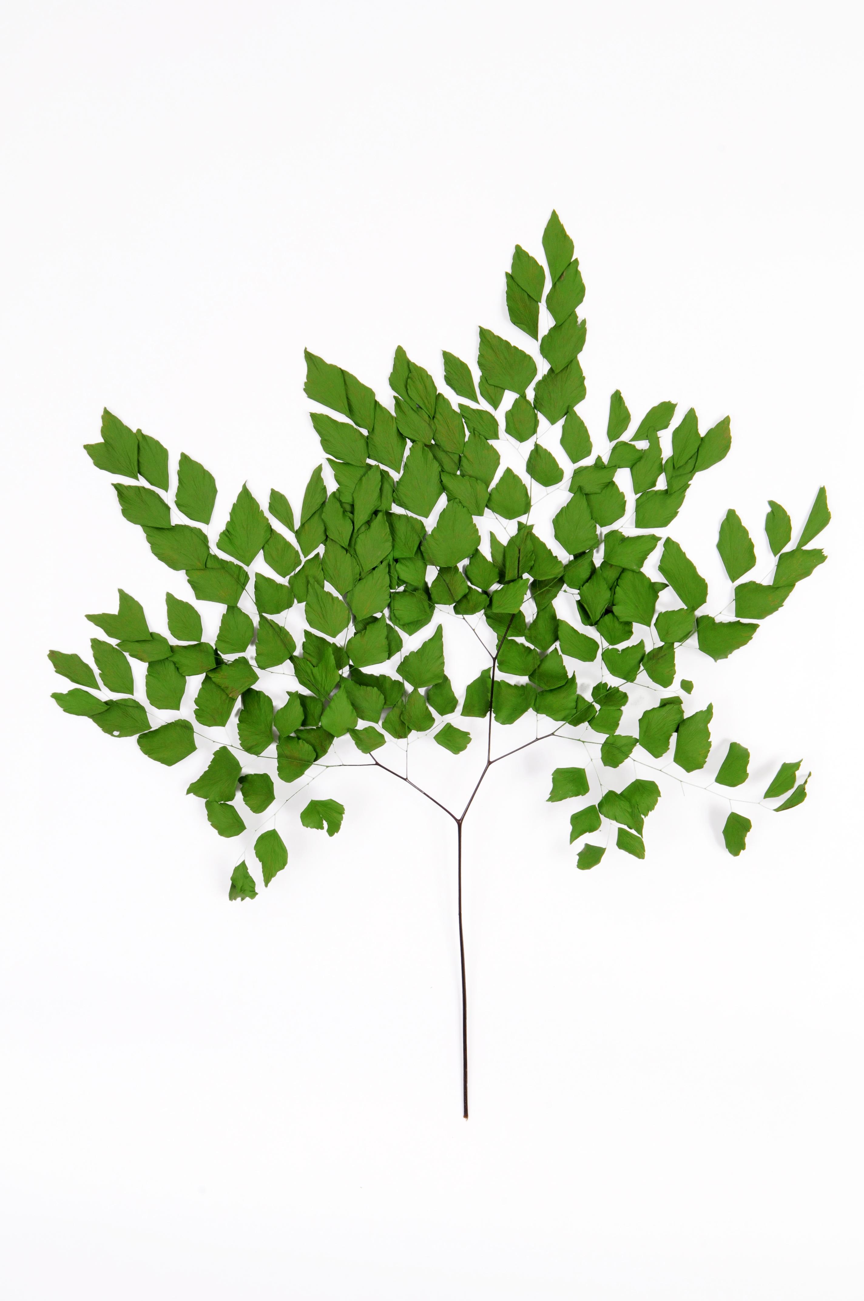 planta desidratada paisagismo preservada