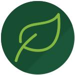 green gem chlorella