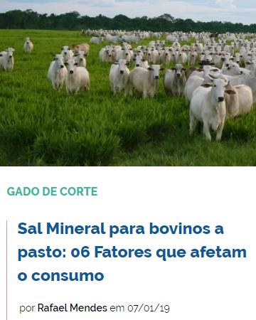 sal-mineral-para-bovinos-a-pasto