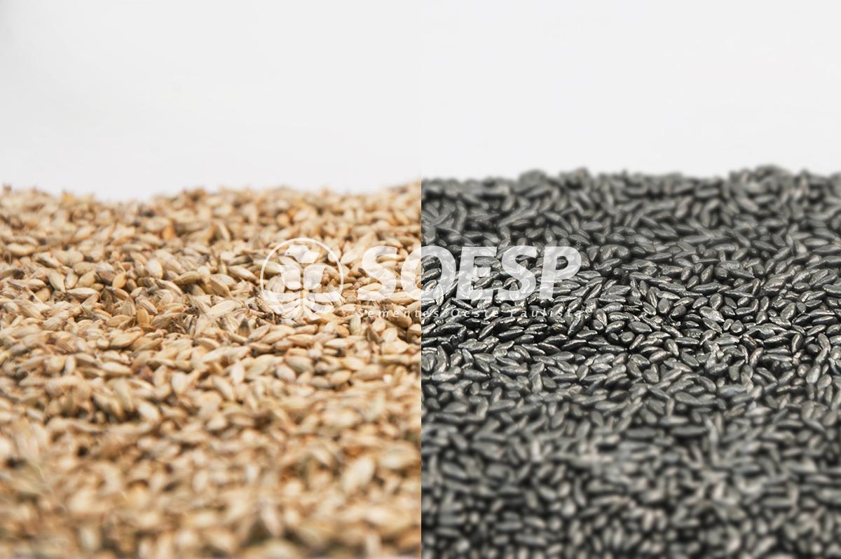 semente forrageira - semente blindada - semente brachiaria