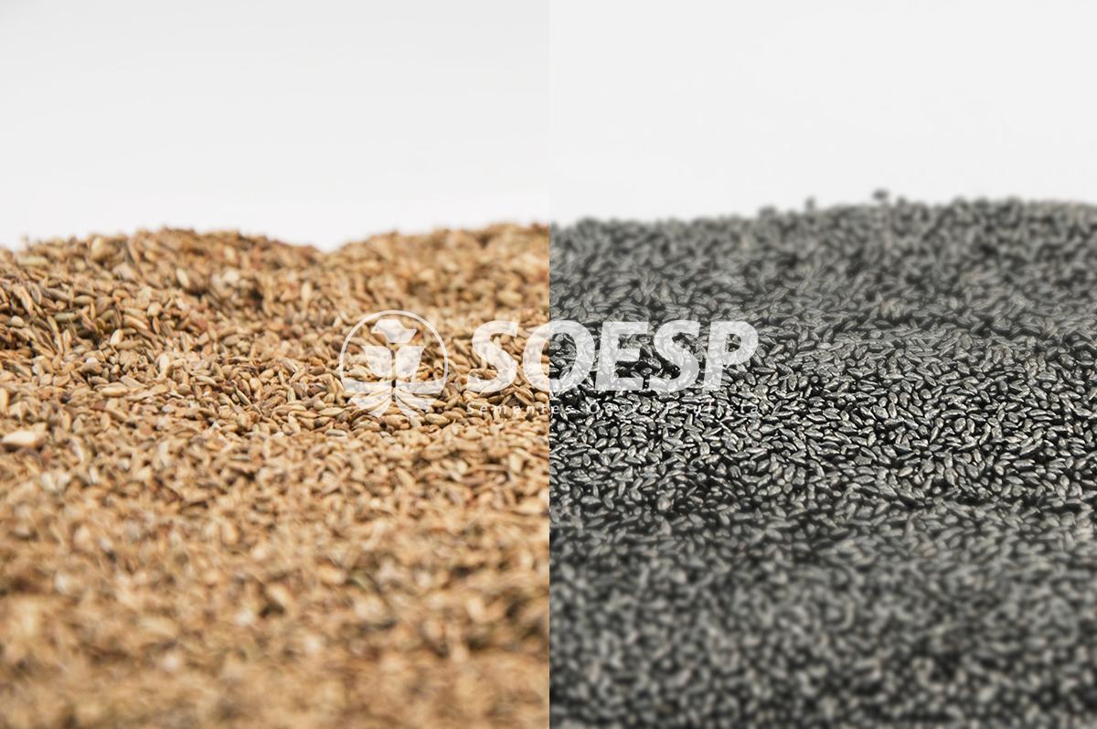semente forrageira - semente blindada